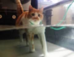 Tank Cat.jpg