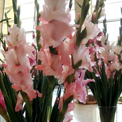 gladioli.jpg