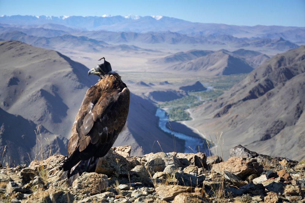 Khasar_S_EagleTerritory_BayanUlgii_Mongolia_Autumn_2016.JPG