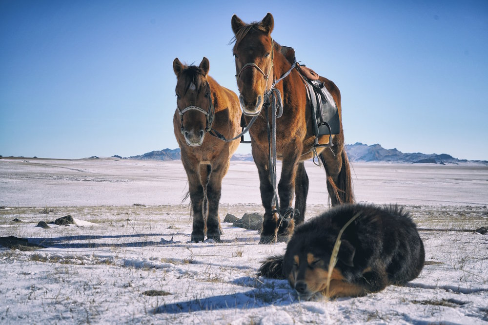 Khasar_S_MansBestFriends_Tuv_Mongolia_Autumn_2016 2.JPG
