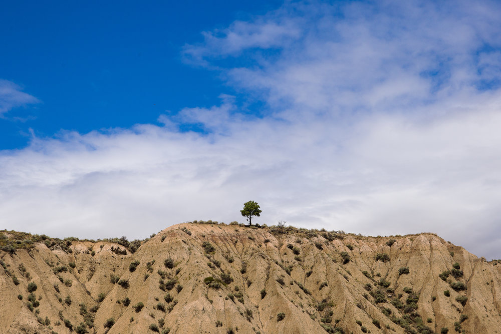 The tree on the hill at Bass Coast, an iconic landmark of the festival.