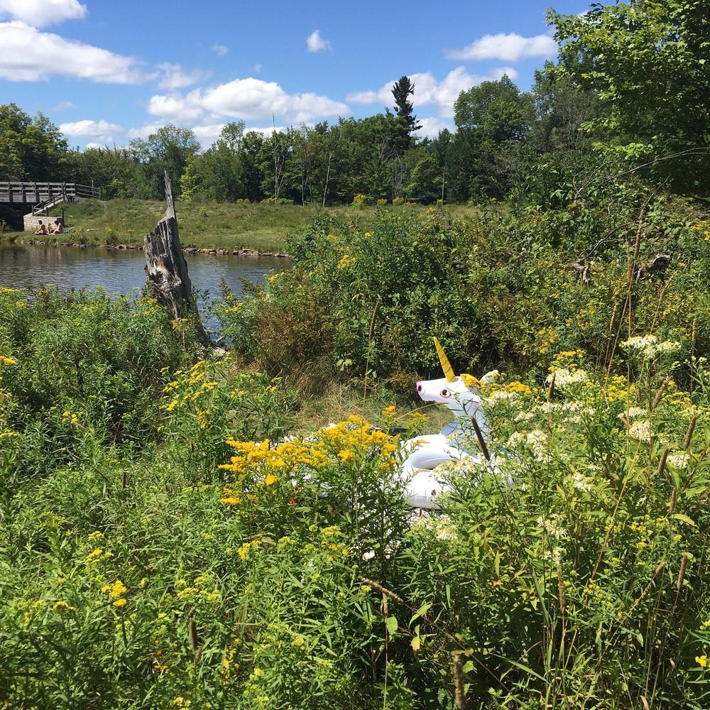 Goldenrods surrounding our secret picnic and sunbathing spot