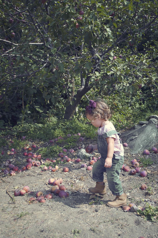 9.apple2.jpg