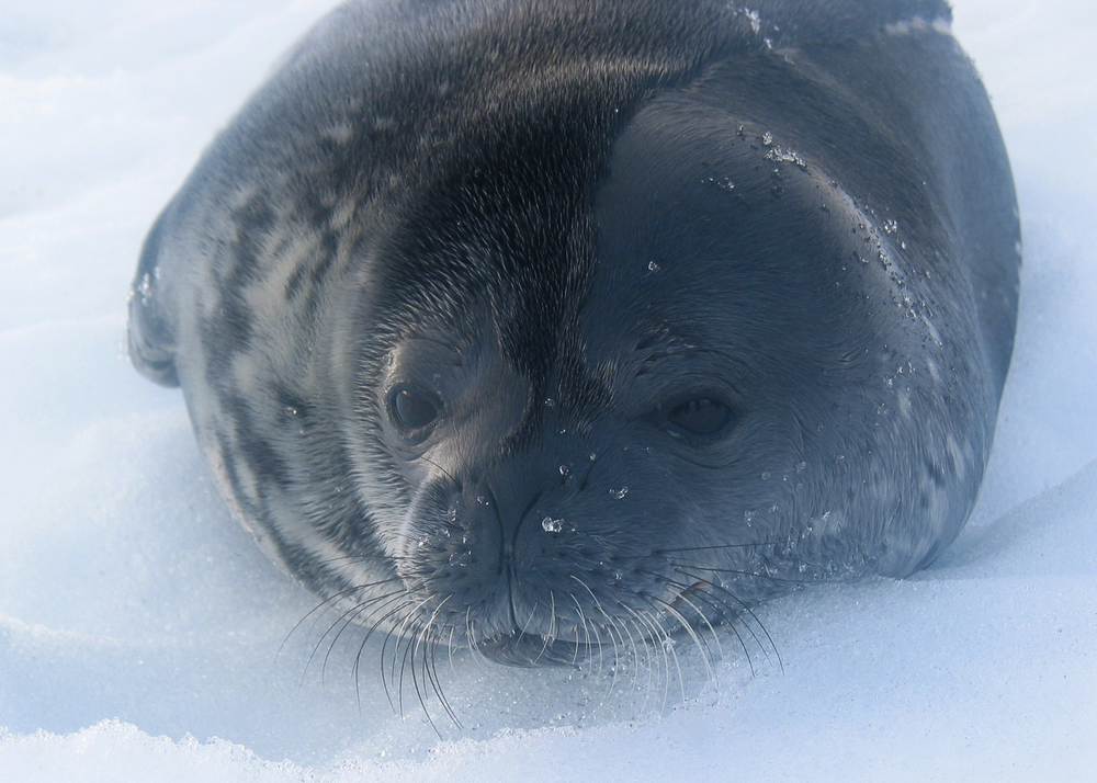 Antártida_01.jpg