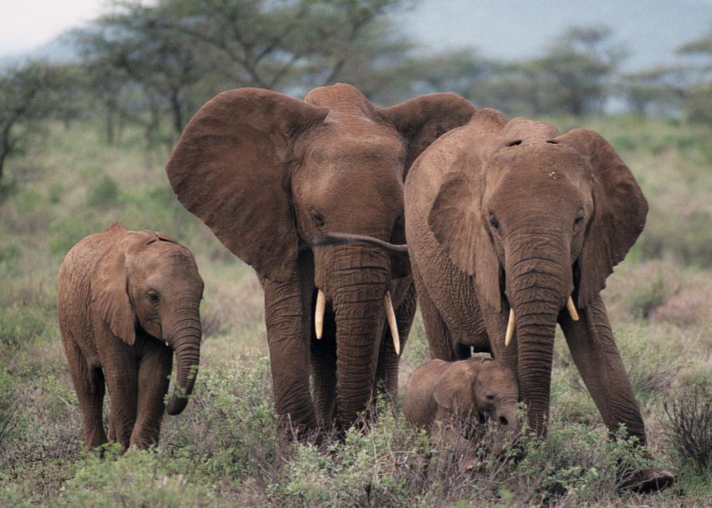 Kenia_02.jpg