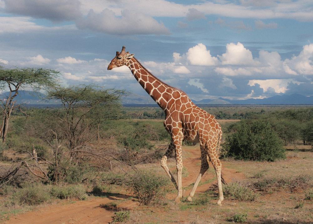 Kenia_03.jpg