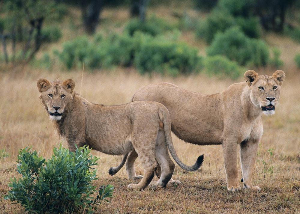 Kenia_04.jpg