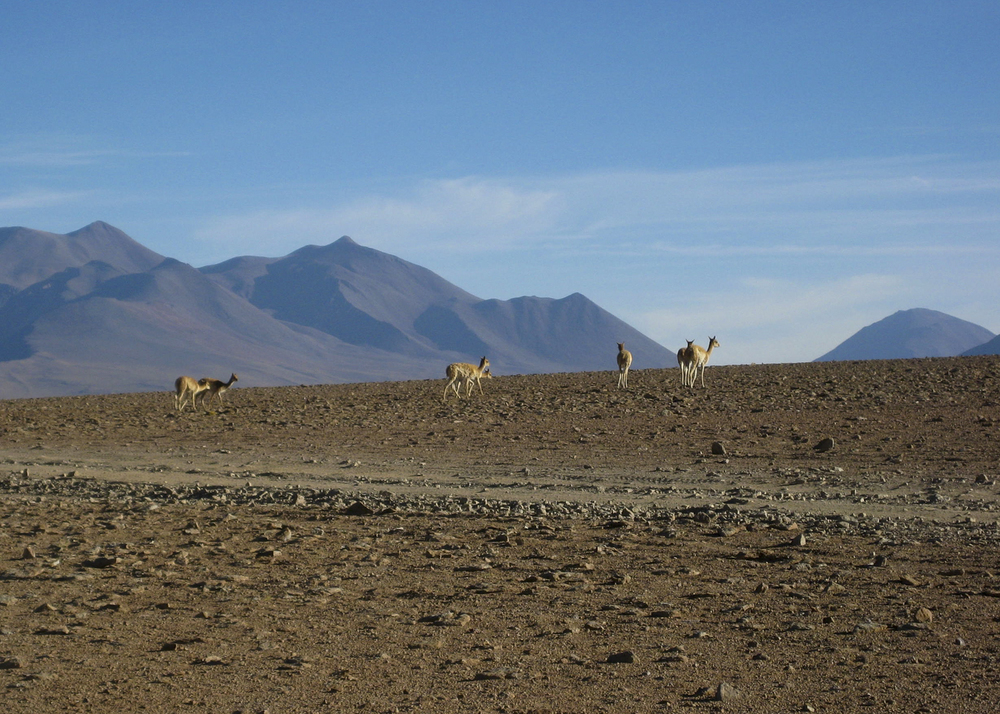 Bolivia_04.jpg