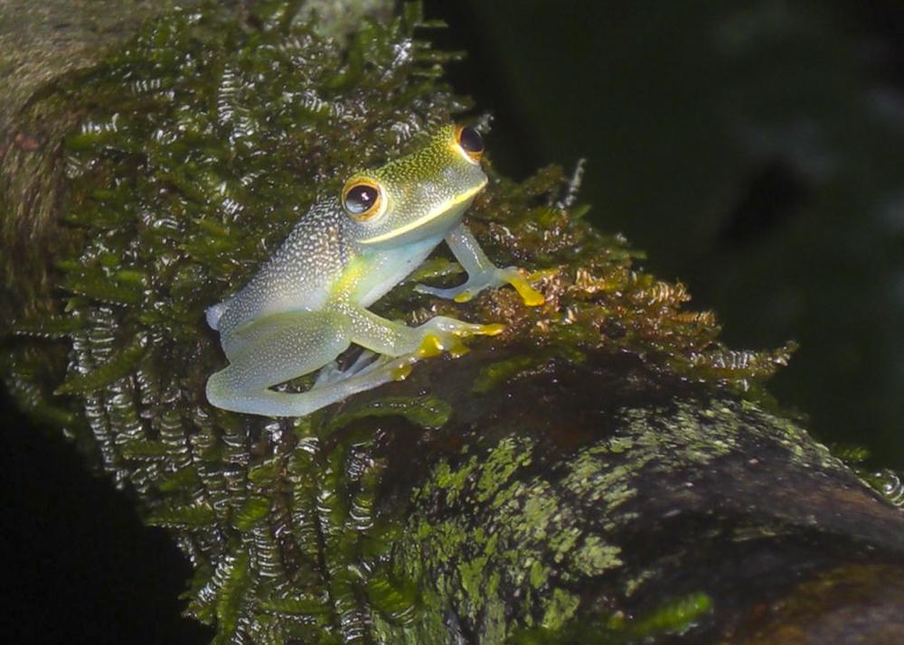 Costa Rica_02.jpg