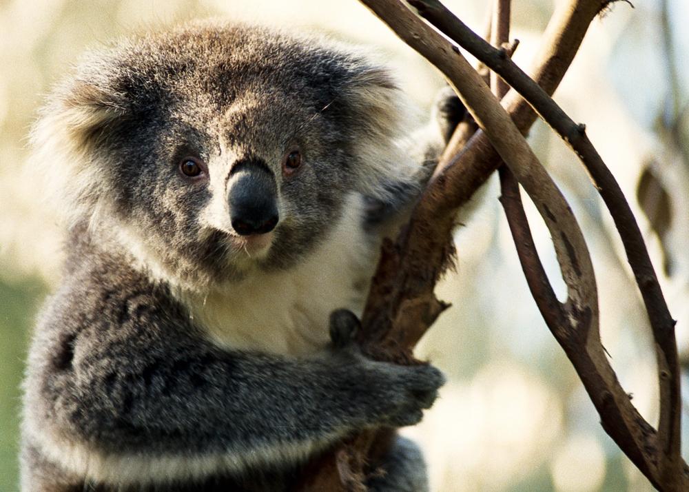 Australia_01.jpg