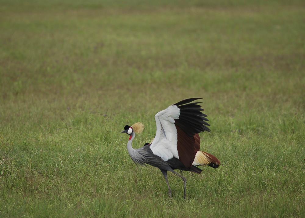Tanzánia MARABU.jpg