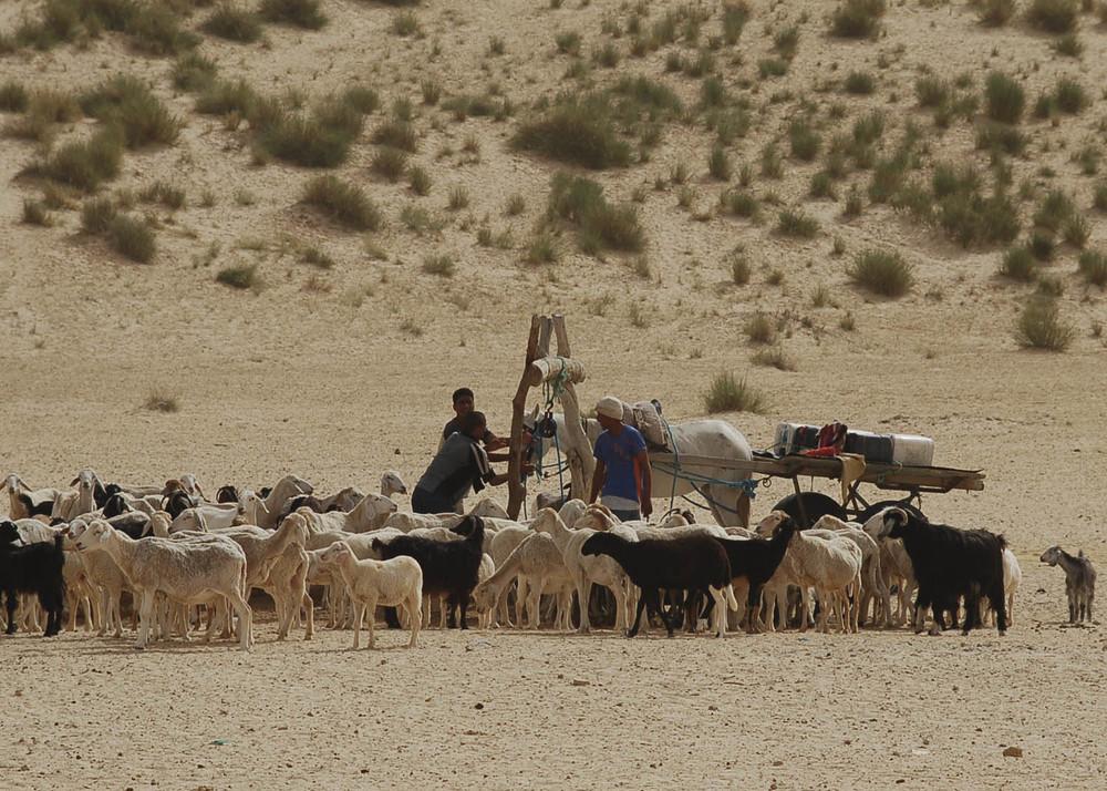Túnez GRANGERS.jpg