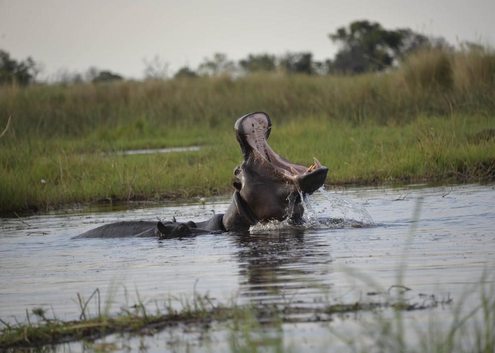 Botswana HIPO 1.jpg