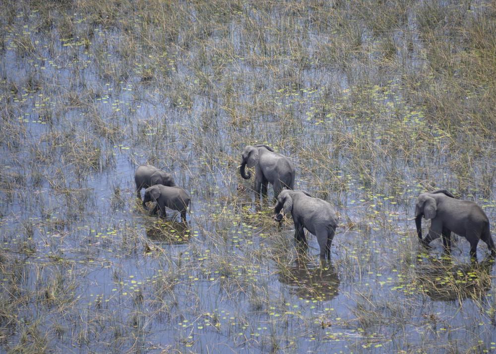 Botswana elefants 2.jpg
