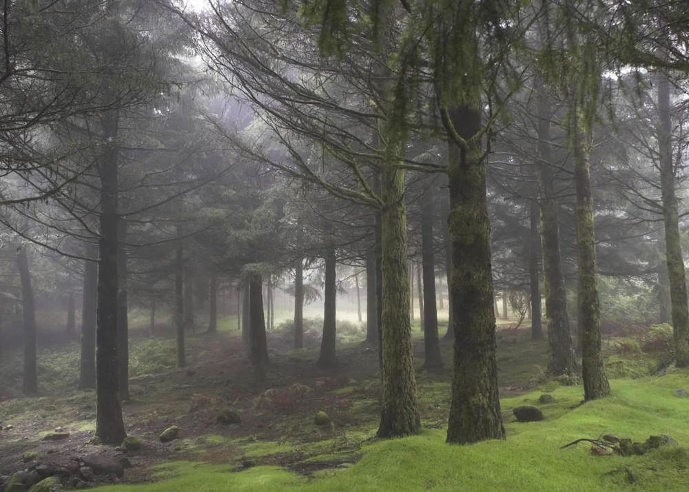 PORTUGAL montaña madeira.jpg