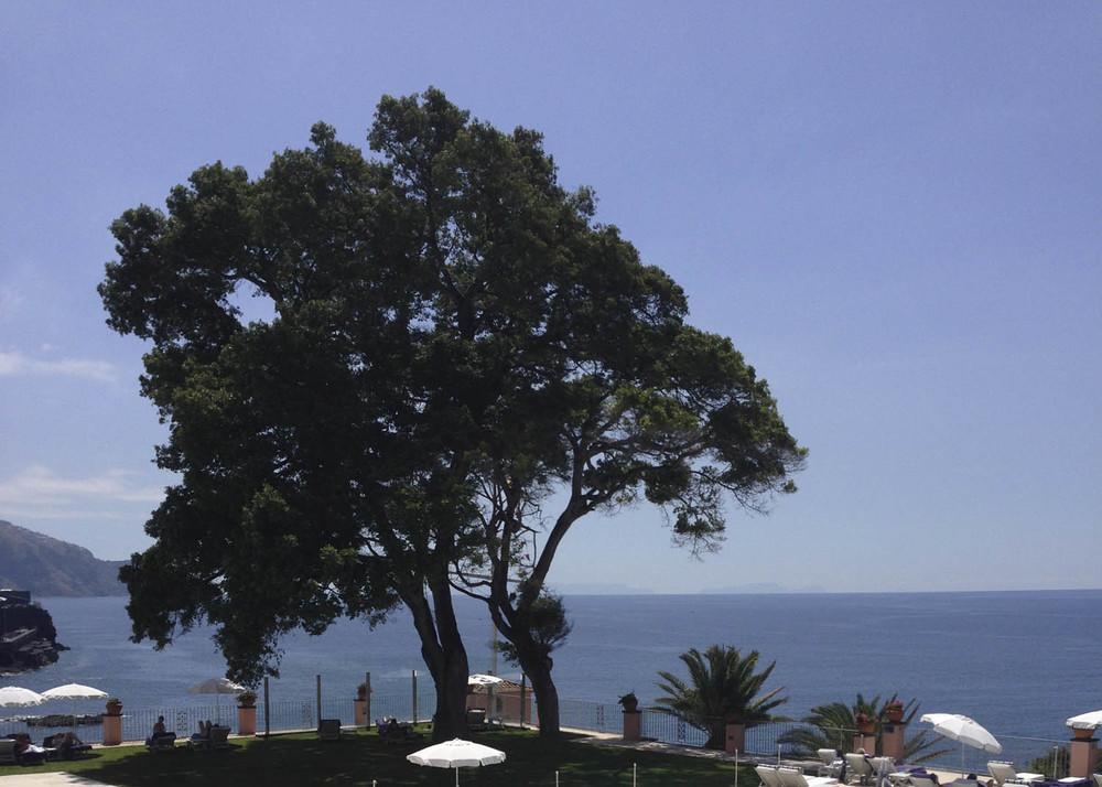 PORTUGAL arbre madeira.jpg
