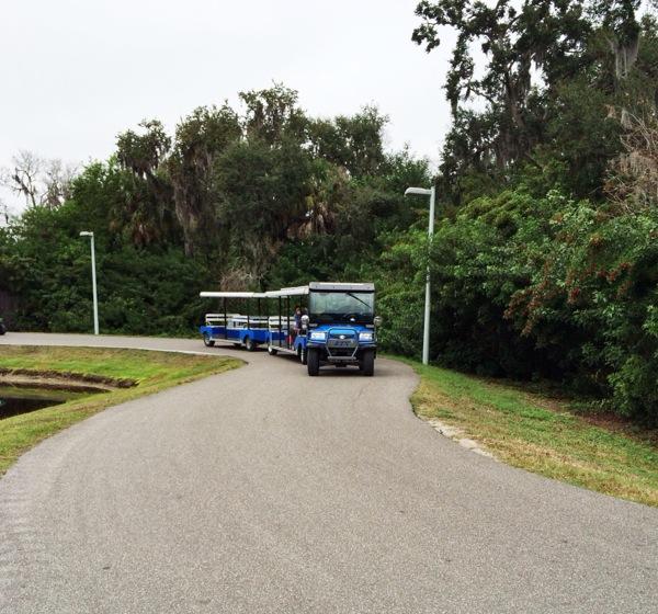 Riktiga sprinters åker golfbilssläp