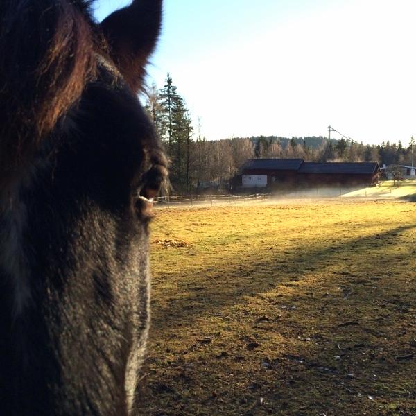 Fina djur de där hästarna.