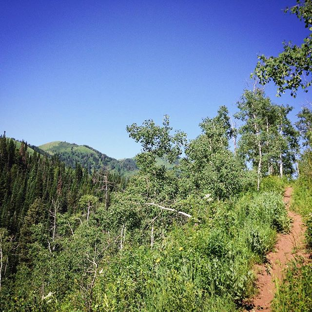 Take us back to the weekend. 😁 #bluebearoutside #mtstyle #singletrack #outsideisfree #mountains #summer