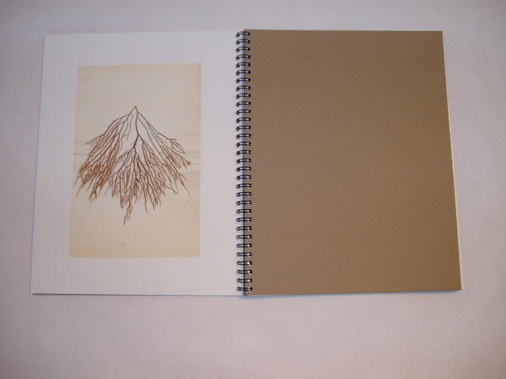 06. Dry Seaweed II.jpg
