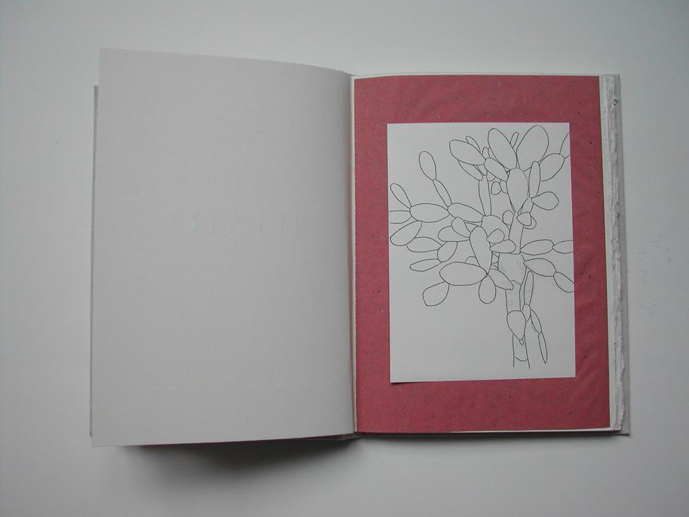 13. Untitled Opuntia (image).jpg