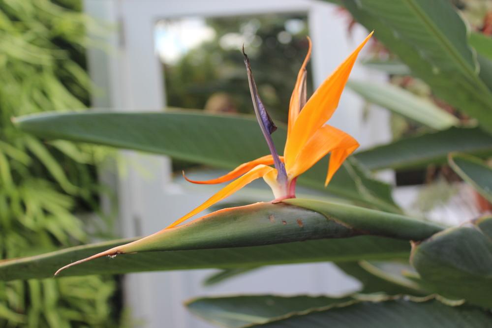 Botanical Garden 086.JPG