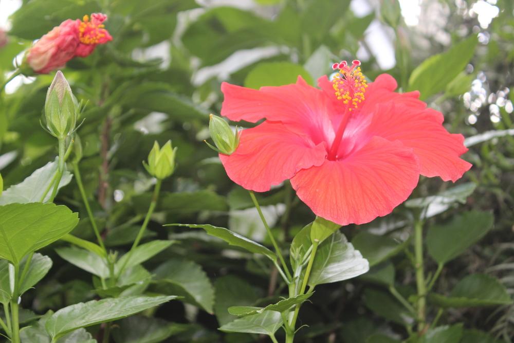Botanical Garden 100.JPG