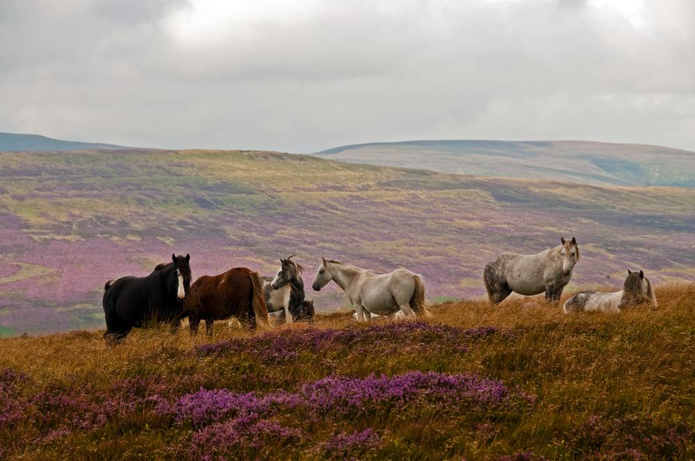 horses copy.jpg
