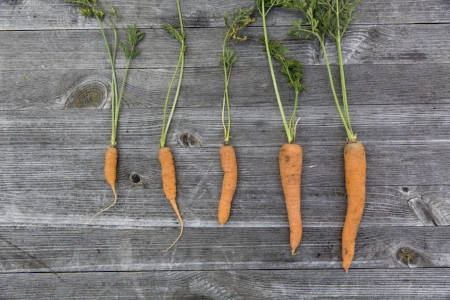 carrots72070.jpg