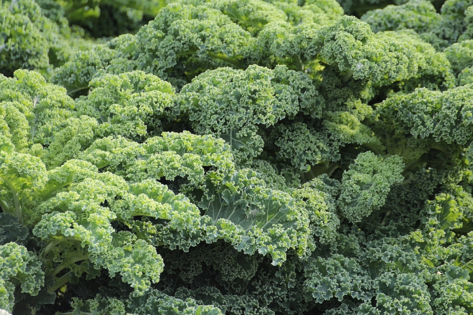 GREEN MONSTER - 2 Apples1 Pear3 stalks of Kale3 Carrots1