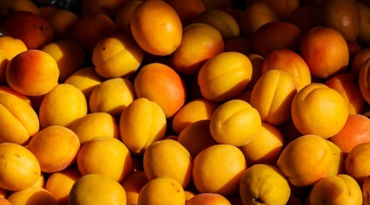 apricot209416.jpg