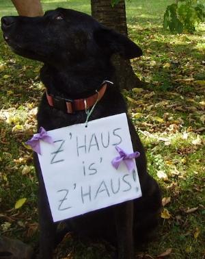 Auch Ihr Haustier kann natürlich bei Ihnen bleiben!