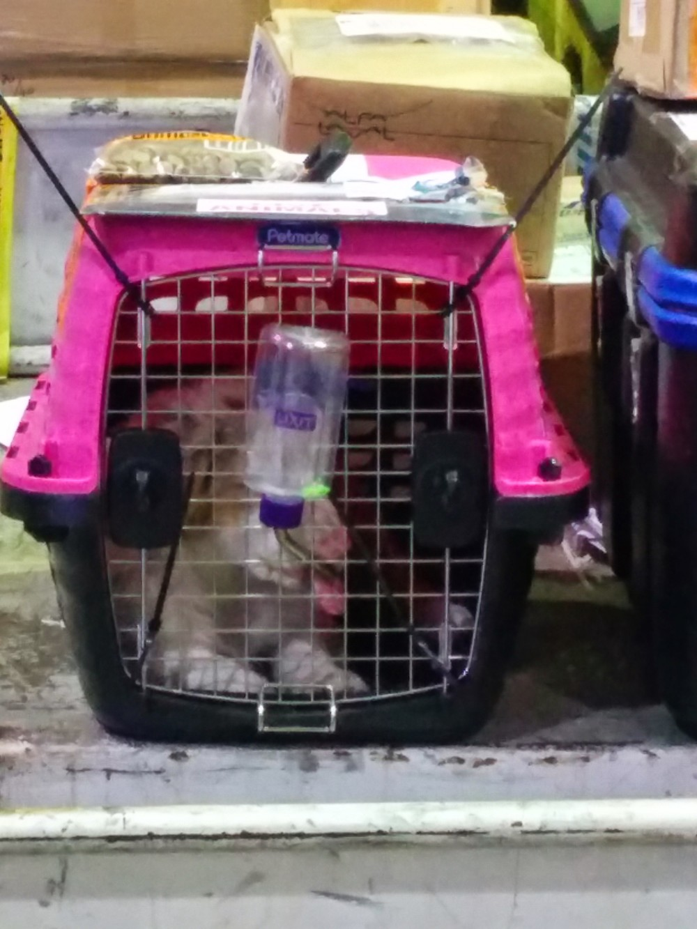 This little puppy had his / her kibble attached to the crate.  The air cargo terminal is where pets get processed for air travel, apparently.  He's sitting next to a bunch of Boeing parts for an outbound flight.
