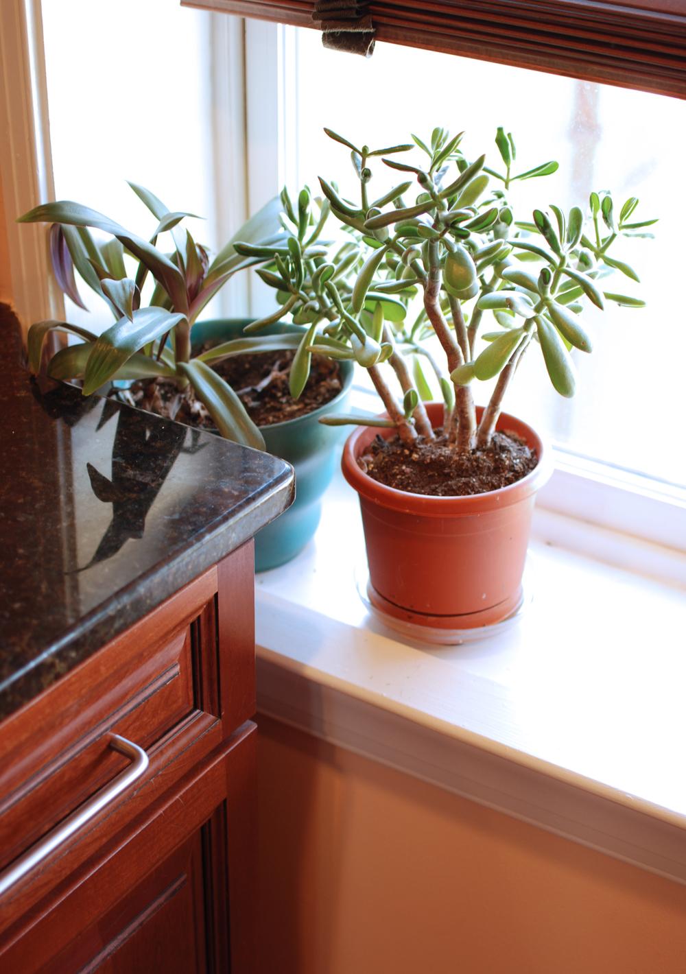 Plants on Kitchen Windowsill
