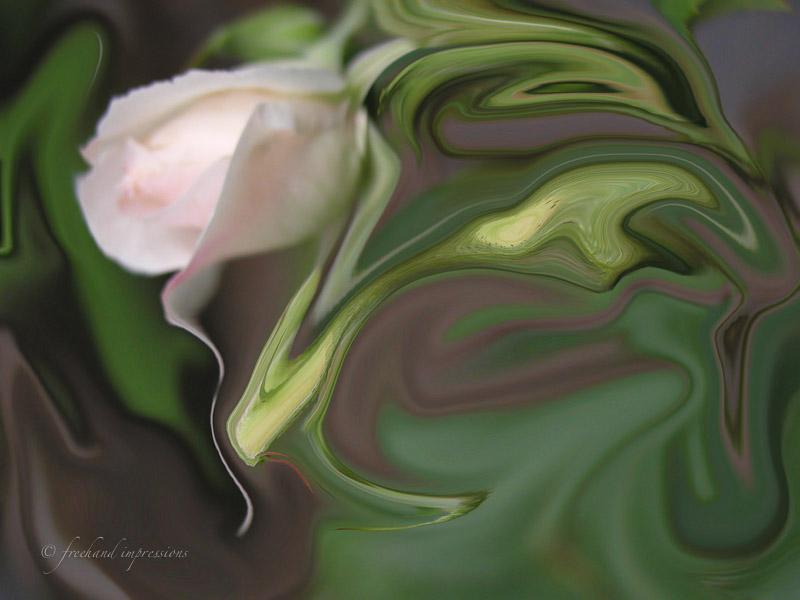 rose swirl-1.jpg