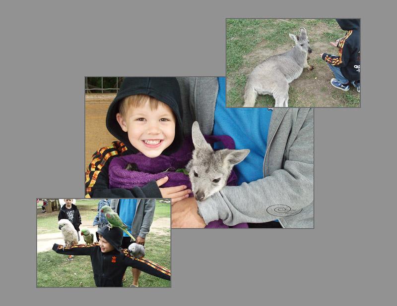 kangaroo story-2.jpg
