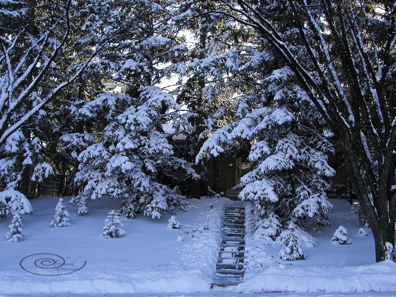 front yard-2.jpg