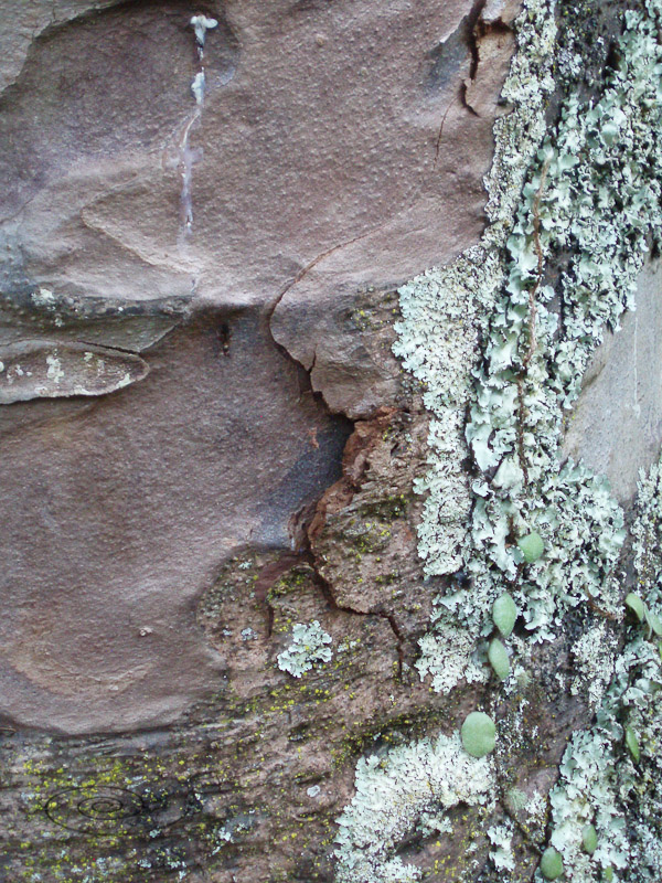 bark and lichen-1.jpg