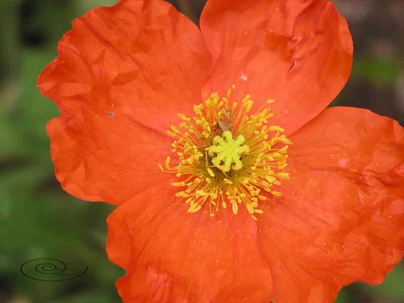 orange-1.jpg