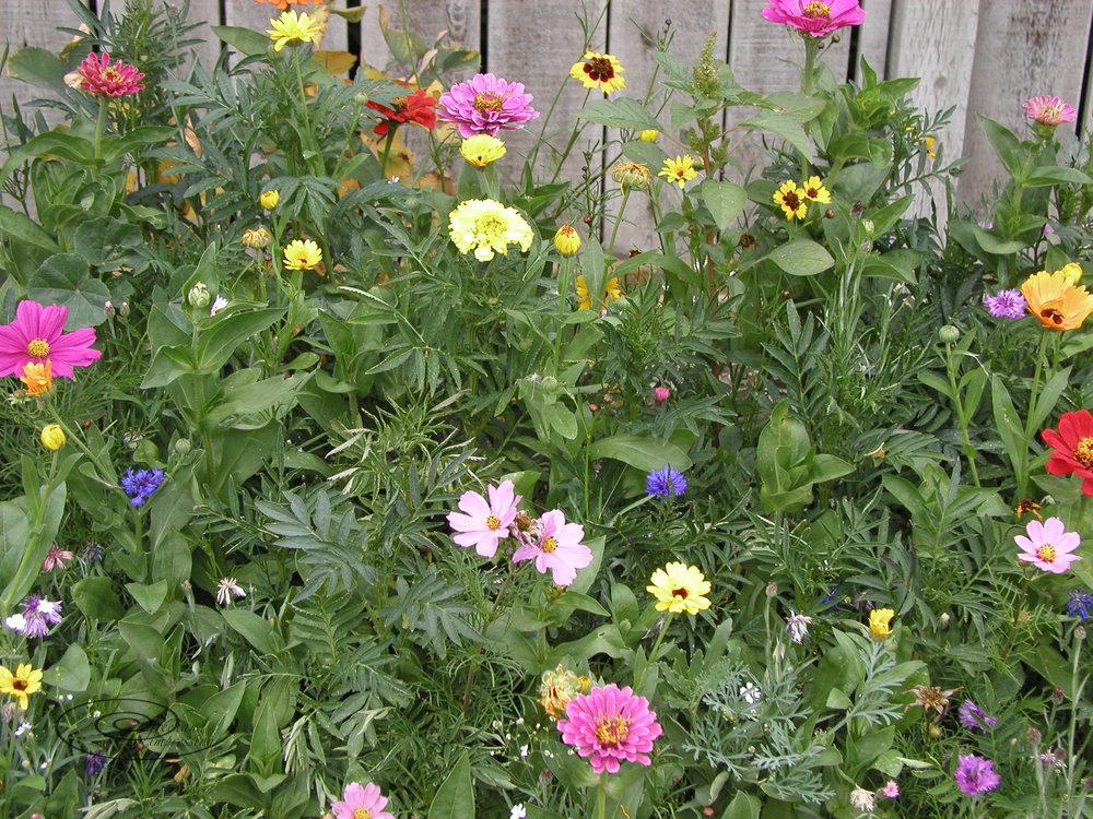 back lane garden-1.jpg