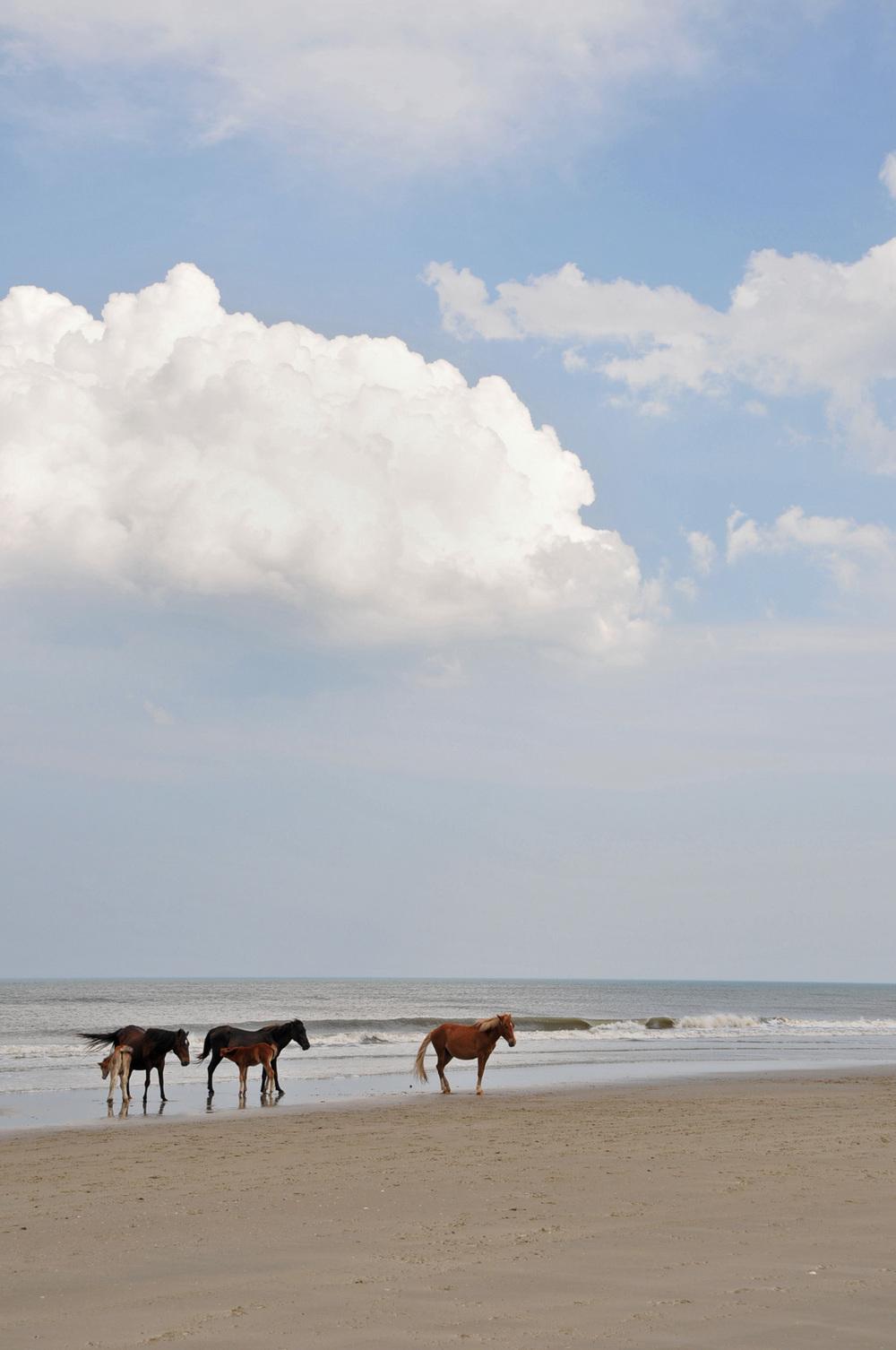 Corolla wild ponies