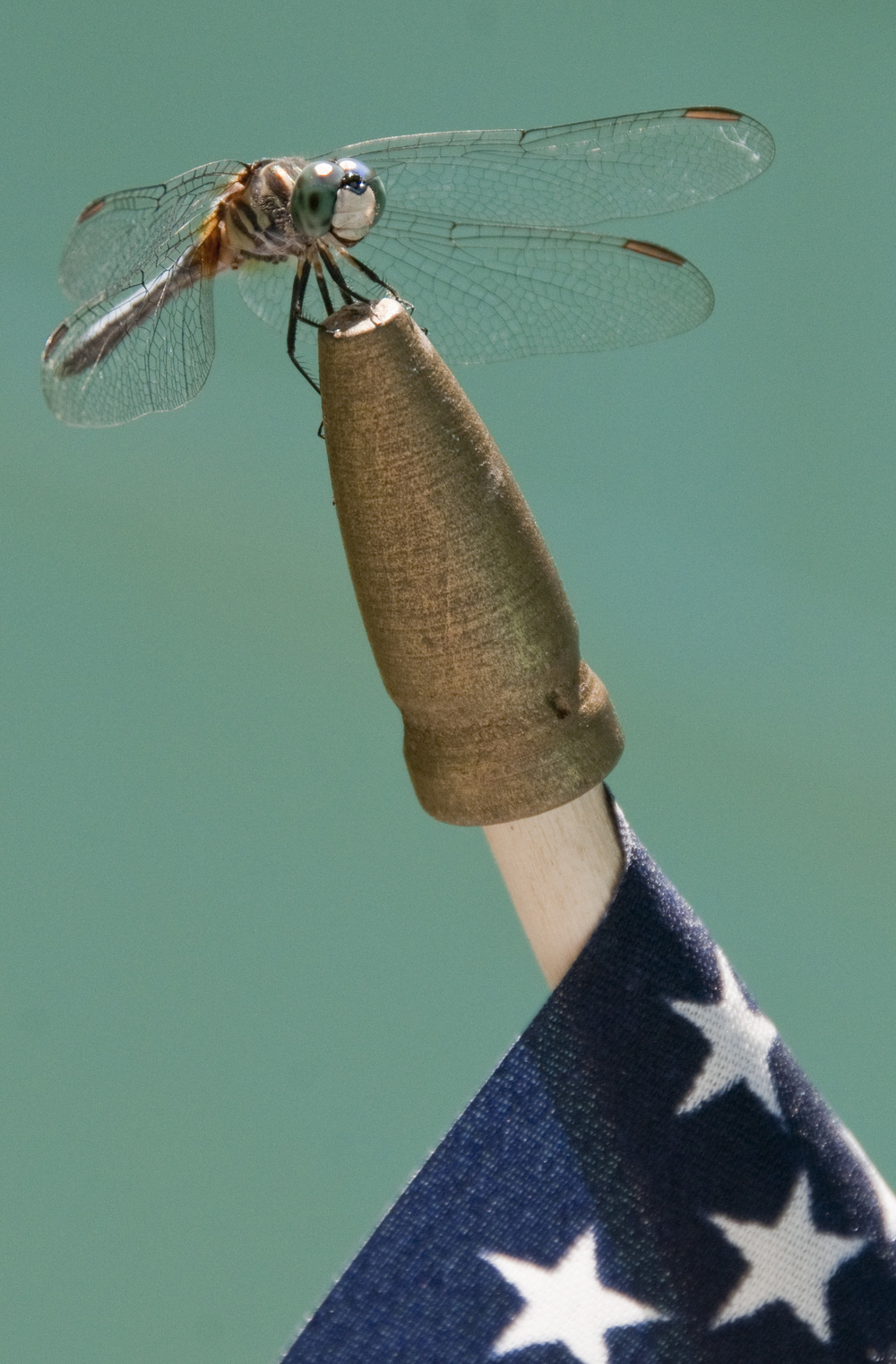 dragonfly on flag