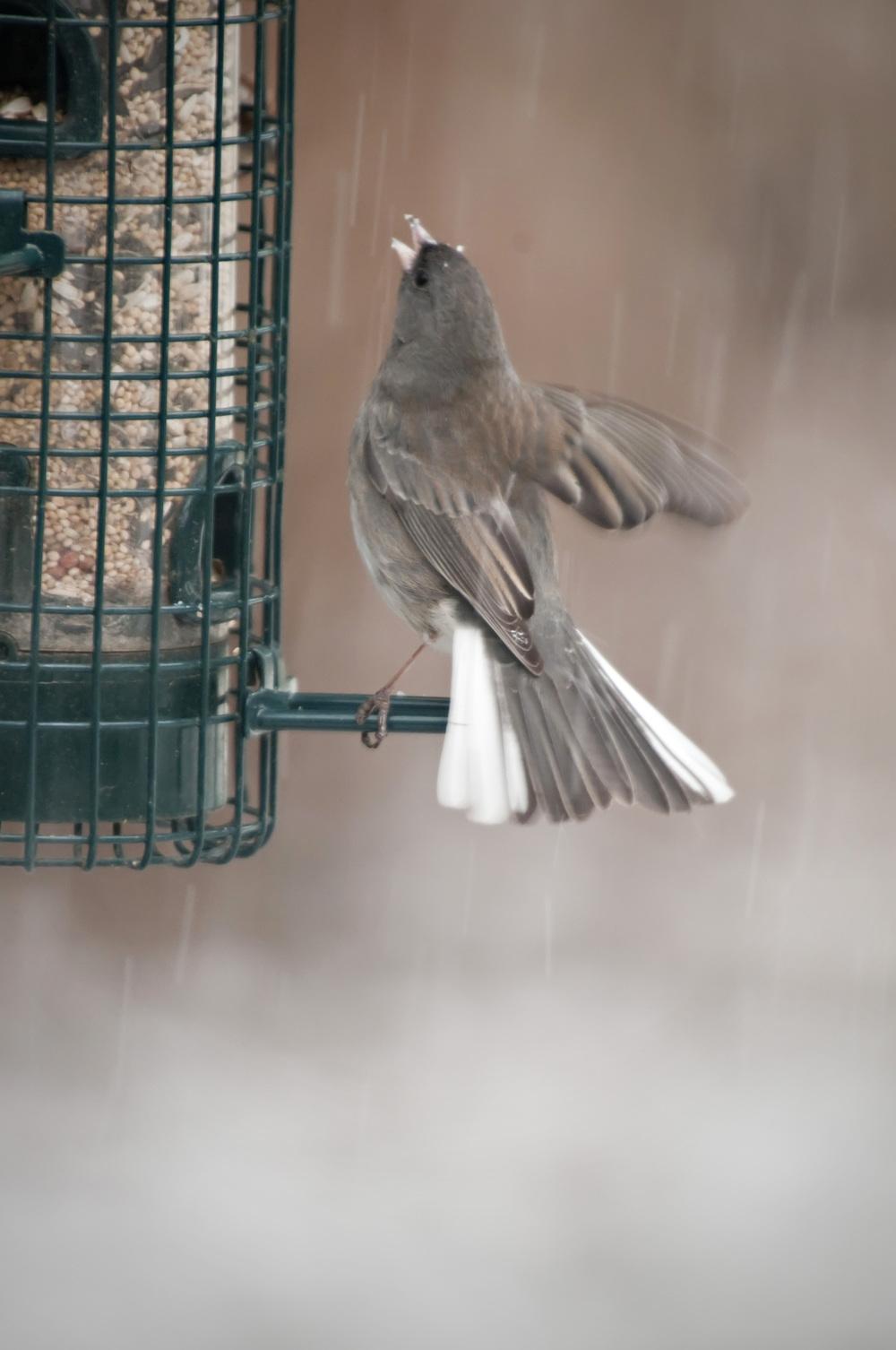 snowy feeder