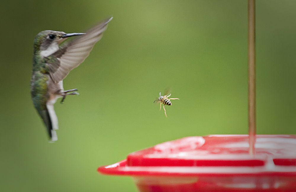hummingbird & bee