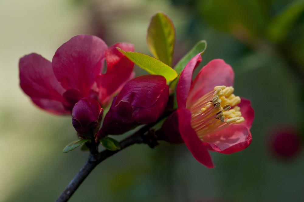 early_spring_03.jpg