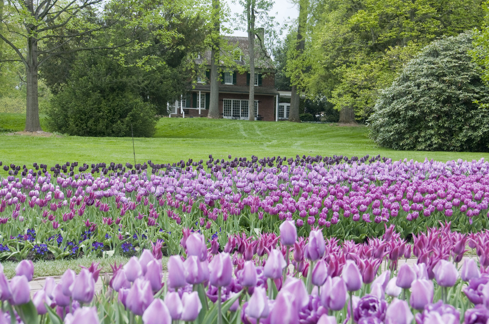 longwood_tulips_etc_004.jpg