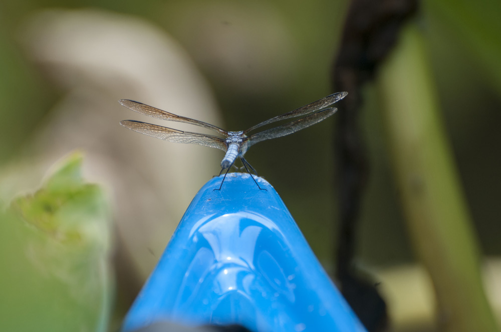 Dragonfly on kayak