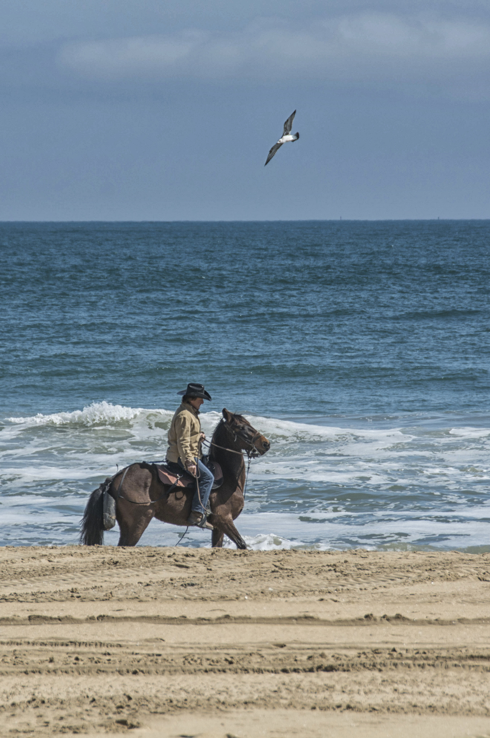 Horse and rider in surf