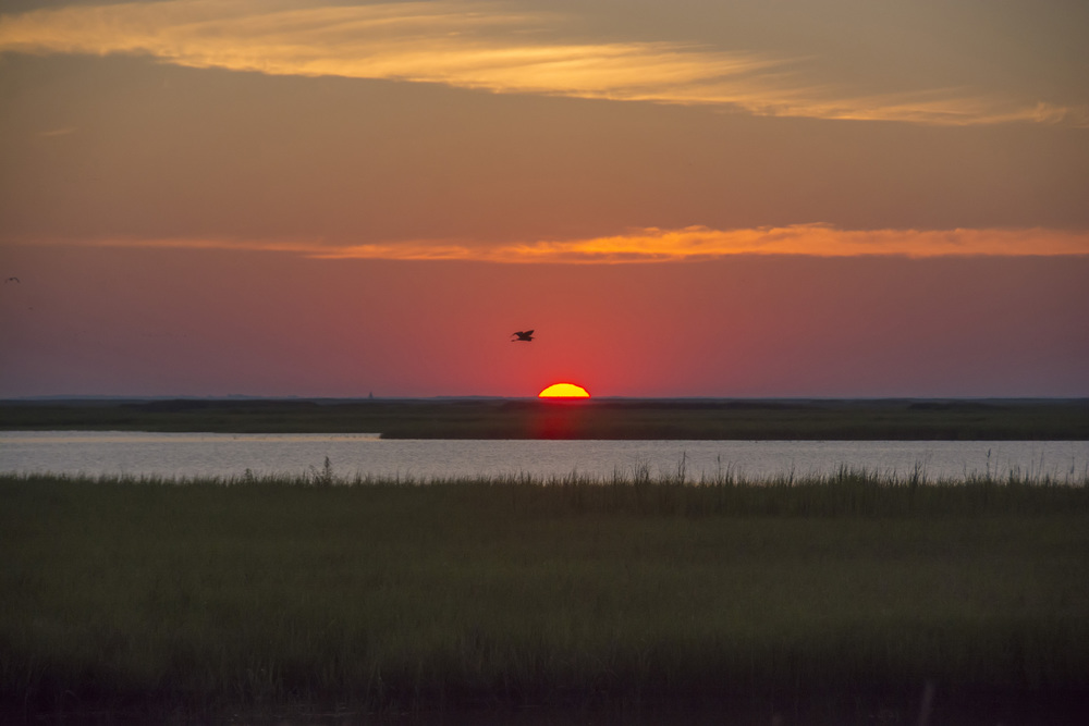 sunrise at Bombay Hook NWR