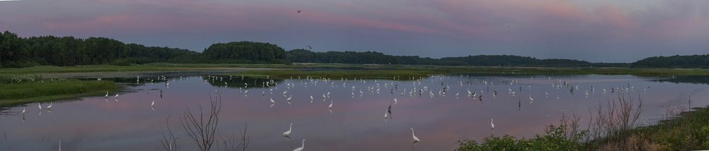 Egret Sunrise at Bombay Hook NWR
